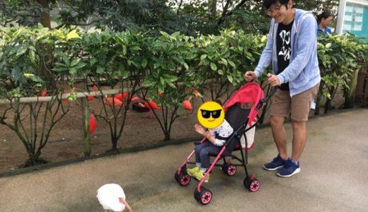 【島根 観光】松江フォーゲルパーク|子連れで楽しめる花と鳥の楽園