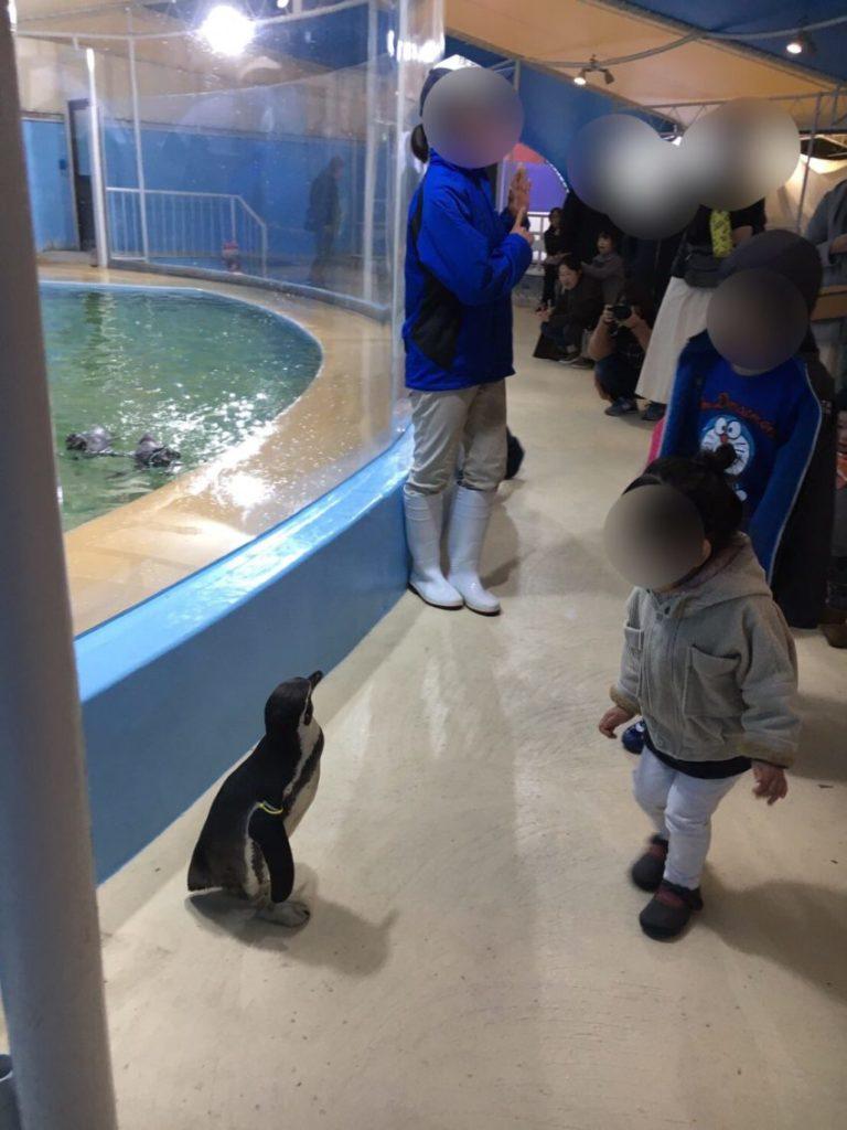 新屋島水族館 ペンギン散歩
