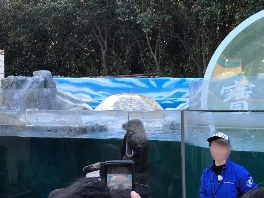 新屋島水族館 傘さしアザラシ