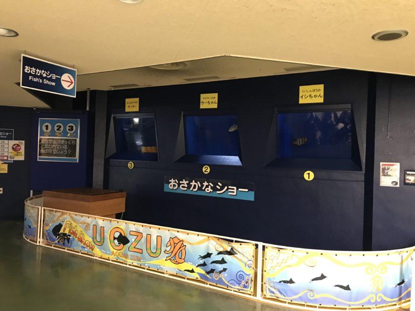 魚津水族館 おさかなショー