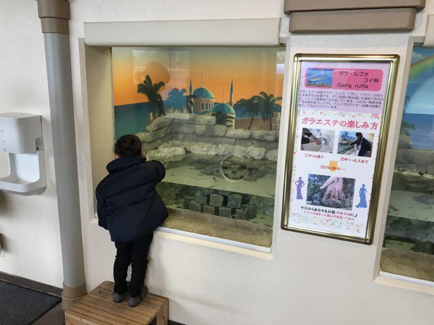 魚津水族館 ガラエステ