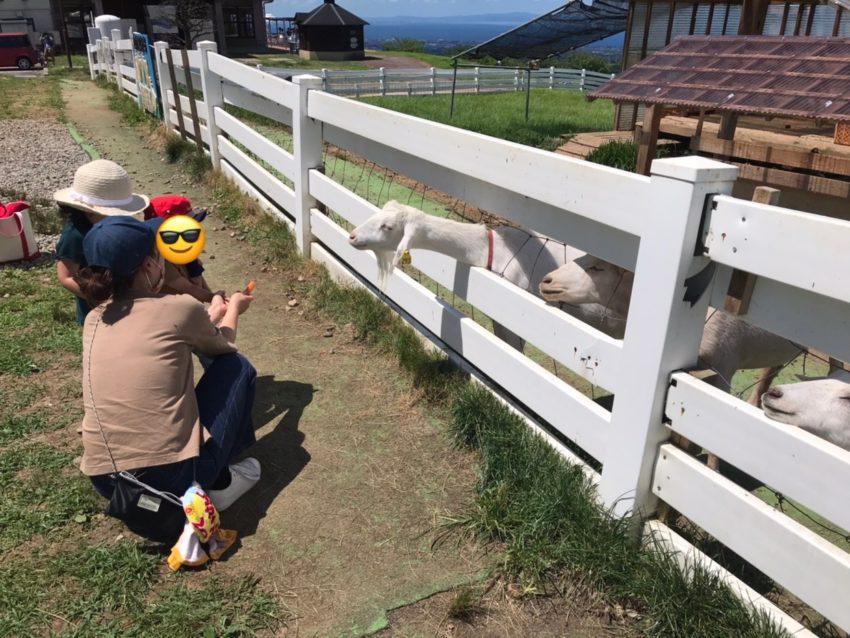 くろべ牧場まきばの風 ヤギ