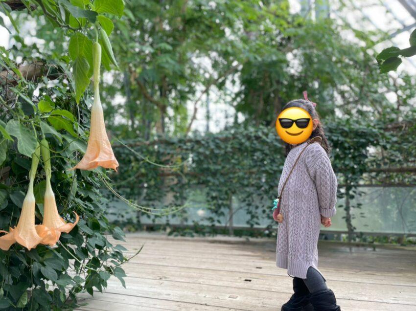 熱帯雨林植物室